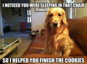 Helped you finish the cookies