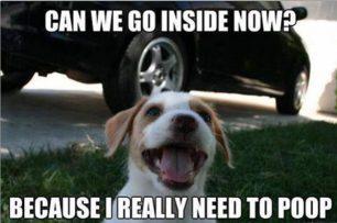 Go Inside