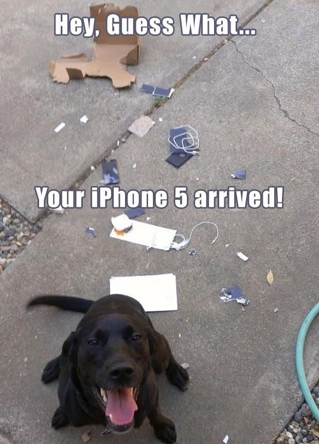 Your-phone-arrived