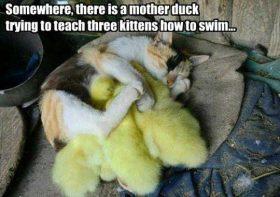 Mom swap…