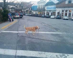 This dog was taking itself for a walk