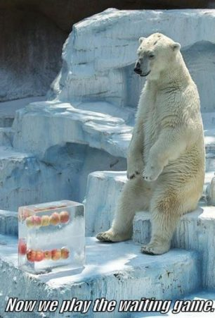 I feel for this poor bear…