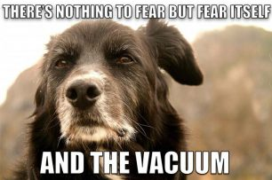 Wise Old Advice Dog